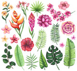 Set of Watercolor Tropical Flowers and Palm Leaves