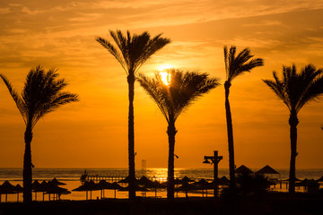 Sunset at the beach with silhouette of palm trees