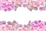 Pink hydrangea flower frame on white background