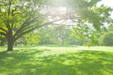 Fototapety 公園の木陰