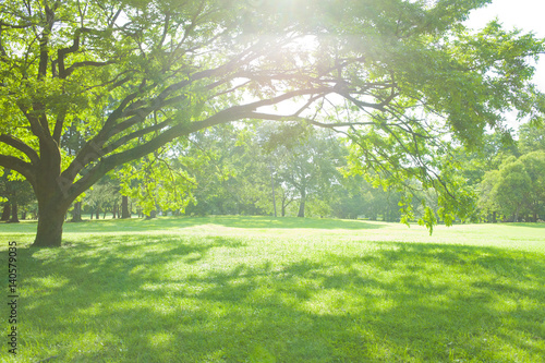 Fotobehang Pistache 公園の木陰