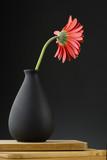 Gerbera in vase on the black background.