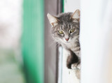 tabby cat afraid of peeking around the corner