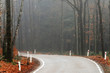 Road with turn in foggy autumn forest.