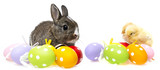 easter eggs and chickens and rabbit isolated on a white background - 140606232