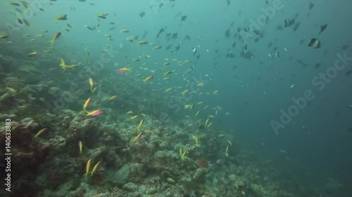 Underwater diving in Maldives with lots of fish around