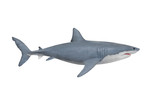 The Great White Shark - Carcharodon carcharias is a world's largest known extant predatory fish. Animals on white background. - 140638440