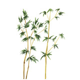 Abstract wild bamboo trees on white background. Hand drawn watercolor vector illustration.