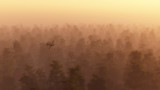 Single engine plane flying over misty pine forest at dawn.