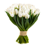 white tulips isolated on white