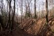Il bosco in inverno