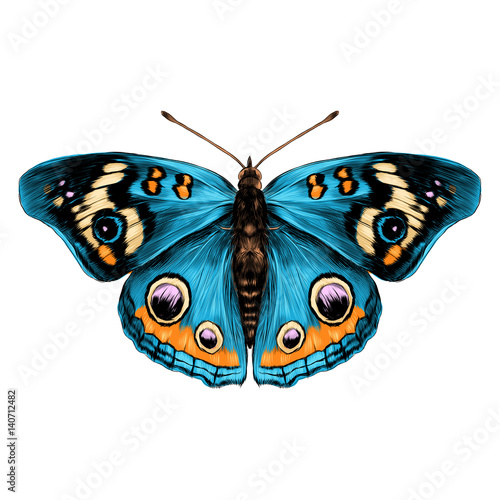 Fototapeta butterfly with open wings top view of symmetry, sketch the graph of vector color drawing butterfly with blue wings