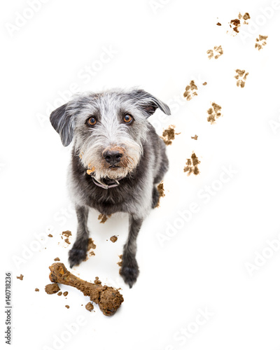 Funny Dog With Muddy Face