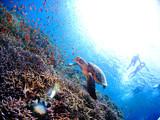 ウミガメと珊瑚礁
