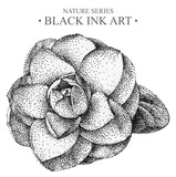 Illustration with flower Camellia drawn by hand with black ink. Graphic drawing, pointillism technique. Floral element for design.