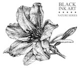 Illustration with flower Azalea drawn by hand with black ink. Graphic drawing, pointillism technique. Floral element for design.