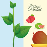 natural product fruit poster vector illustration eps 10