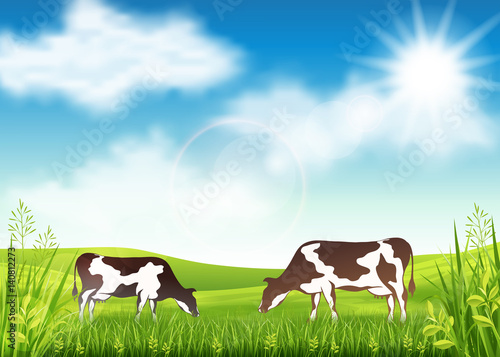 Cows grazing in a summer meadow