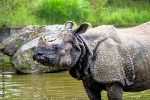 Poster Nashorn - Rhinozeros - Indisches Panzernashorn