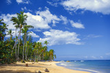 Tropical island. Palm trees, sand, ocean on background of blue sky with white clouds