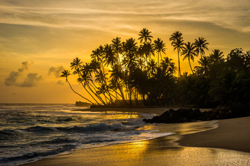 Indian ocean shore with silhouettes of palm trees and amazing cloudy sky on sunset in Sri Lanka.