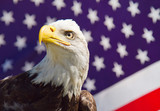 A portrait of an american bald eagle with the u.s. flag in the background