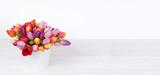 Tulpen / weißer Hintegrund