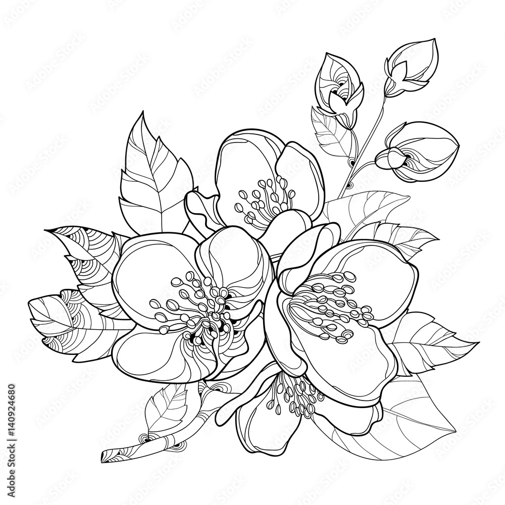 Branch Outline Jasmine Flowers Bud And Leaves Floral Elements For