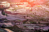 Terraced rice fields in Yuanyang, China.