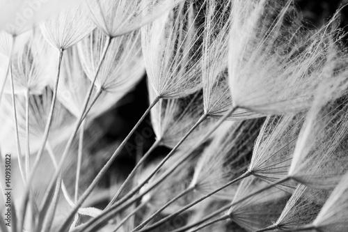 abstrakcjonistyczna-makro-fotografia-rosliien-ziarna-czarny-i-bialy