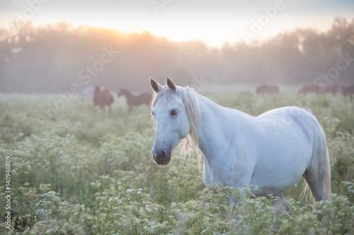 Orlov trotter at dawn