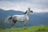Arabian mare in the mountains. - 140949878