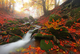 autumn stream in the forest, landscape in the mountains, Europe travel