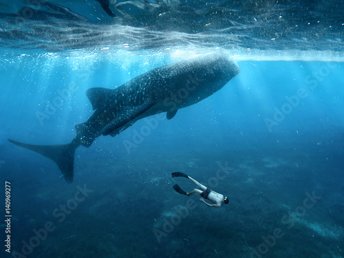 Poster Freediving with whale sharks