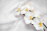 The branch of white orchids on white fabric background  - 140991041