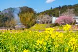 線路と菜の花畑