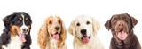 Portrait Dogs Wall Sticker
