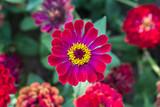 Red Gerbera. Romantic beautiful flowers.