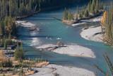 Wapiti im Fluss