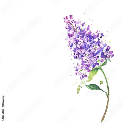 Fotobehang Planten Spring flower, twig purple lilac. Syringa vulgaris.