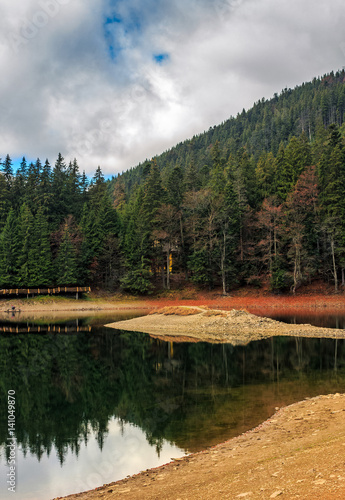 spruce forest on the lake in mountains