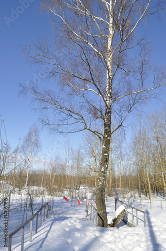 Memorial birch tree to 2010 Polish Air Force Tu-154 crash at tragedy site in Smolensk