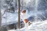 dog portrait of a Jack Russell terrier on nature in winter snow - 141066684