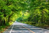 車道:緑のトンネル