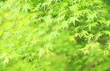 爽やかな緑イメージ