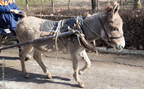 donkey cart driven in the park