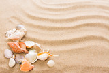 Seashell on the beach. Summer background with hot sand - 141158247
