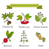 Vintage collection of hand drawn medical herbs and plants - 141160400