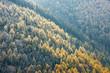 Leśna panorama