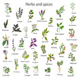 Fototapety Hand drawn set of culinary herbs and spices